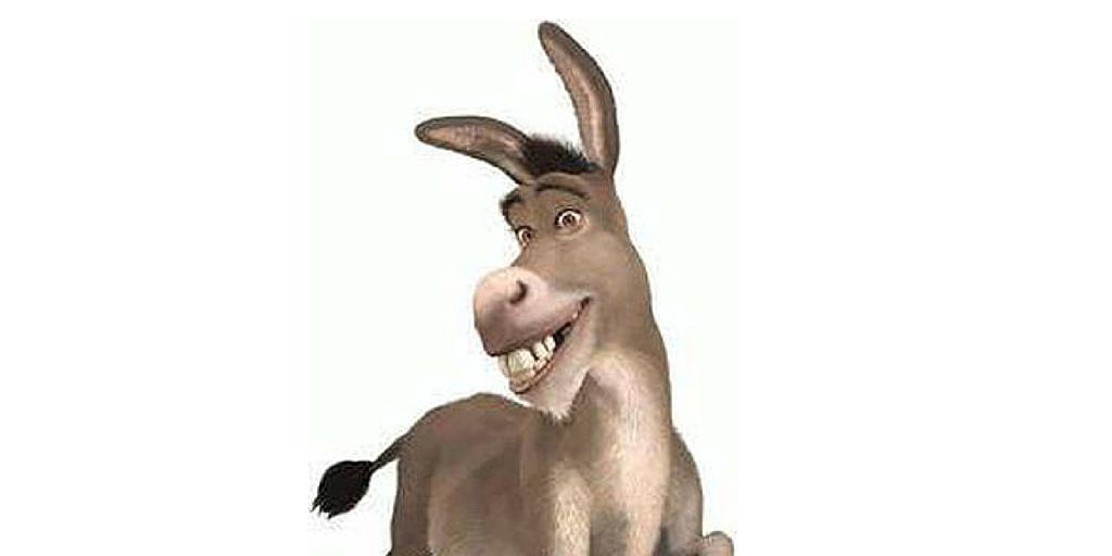 burro5